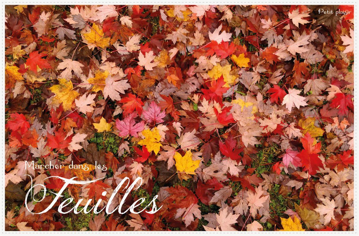 Confettis d'automne