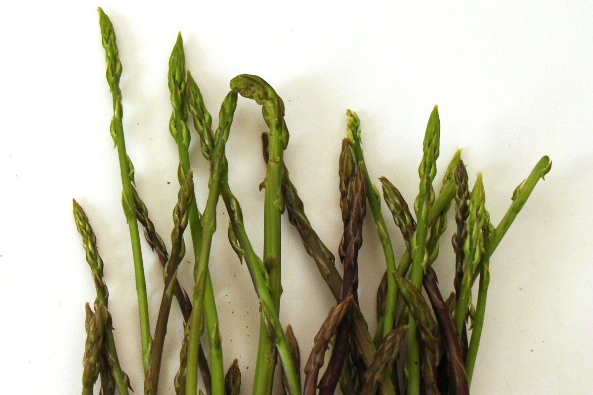 Chasse aux asperges sauvages