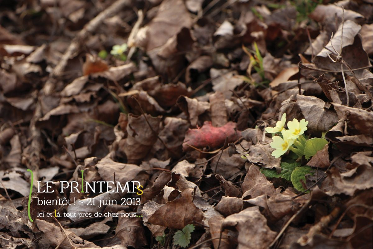Le printemps se fait attendre
