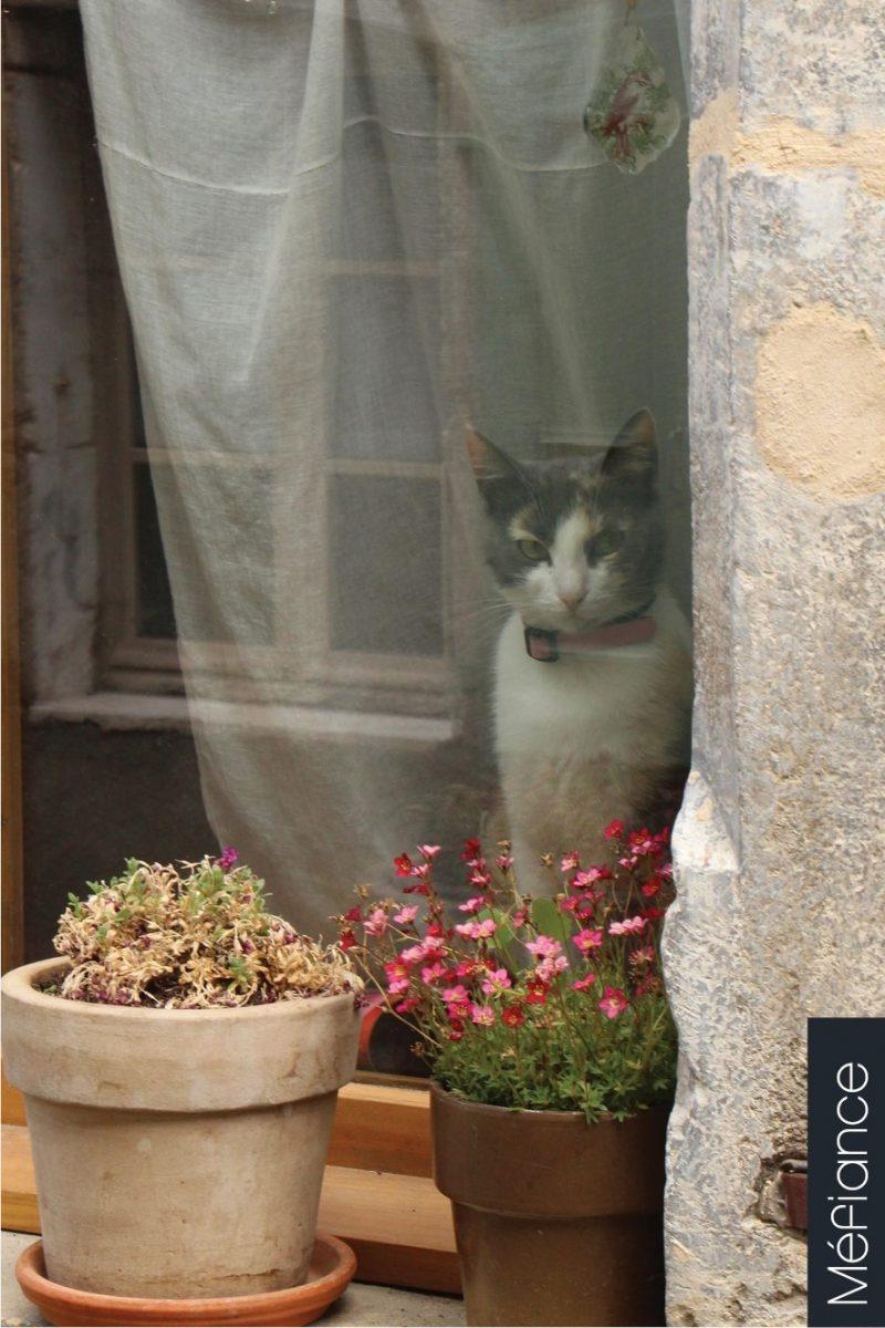 Chat échaudé…