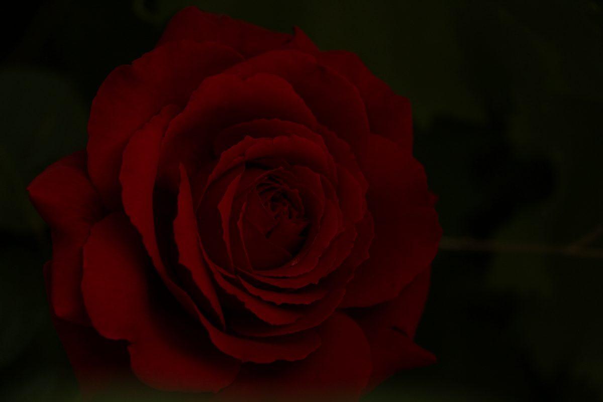 Rouge sang