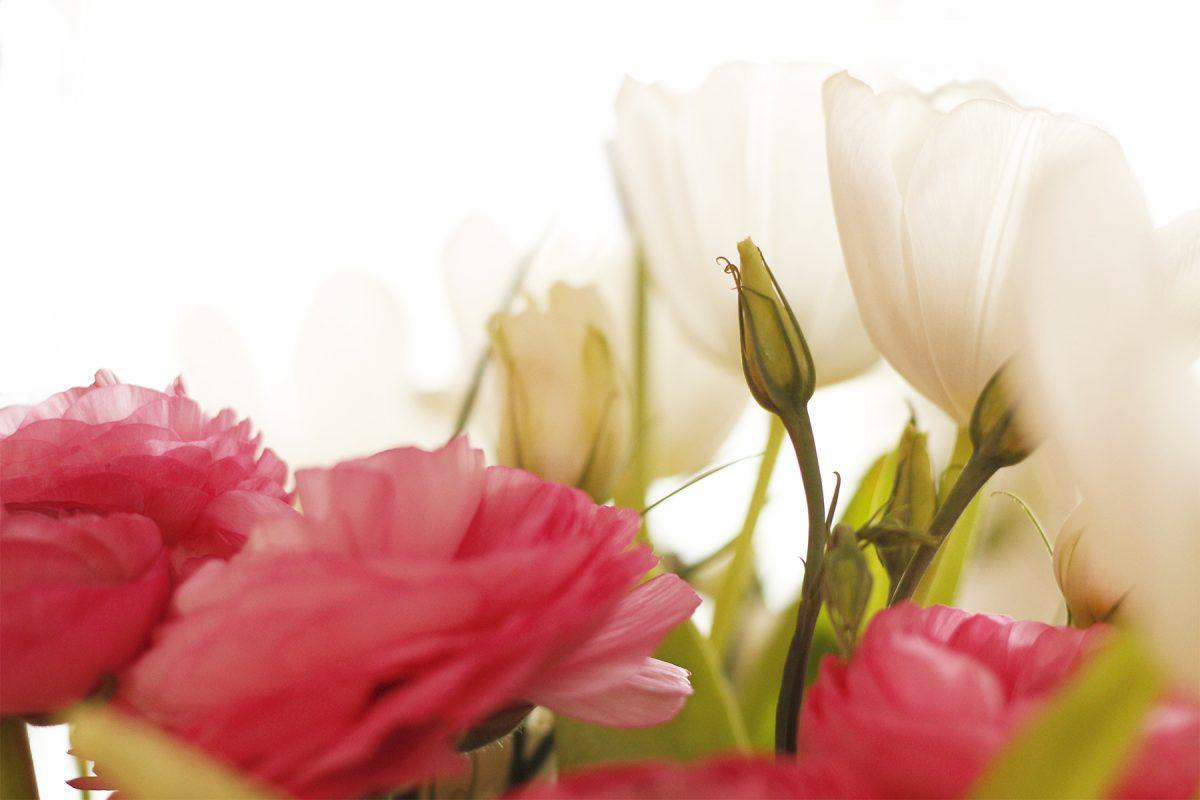 Tulipes & renoncules